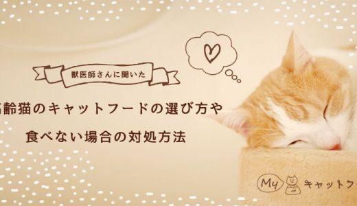 【獣医師さんに聞きました】高齢猫のキャットフードの選び方や食べない場合の対処方法