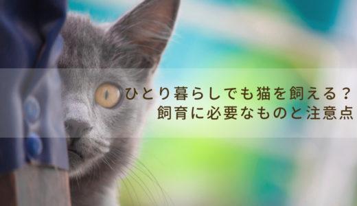 ひとり暮らしでも猫を飼えるの?飼育に必要なものと注意点を紹介