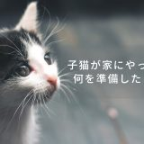 子猫が家にやってくる!何を準備したらいい?
