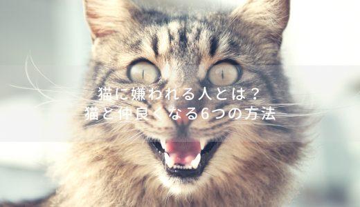 猫に好かれる人と嫌われる人がいる?猫と仲良くなる方法