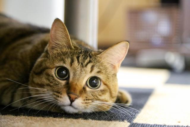 成猫用のキャットフードからシニア用に切り替えるタイミングは?