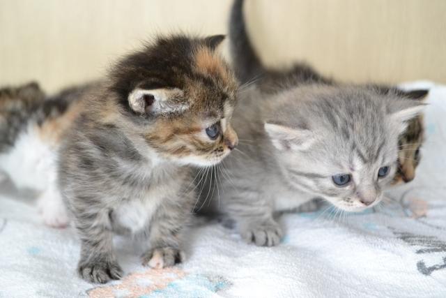 オールステージのキャットフードを子猫に与えても大丈夫?