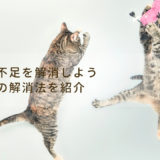 猫の運動不足を解消しよう!おすすめの運動不足の解消法を紹介