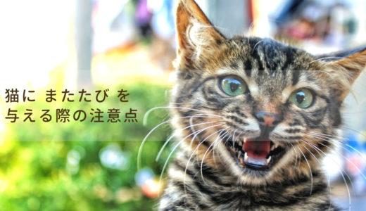 猫に「またたび」はどんな効果があるの?「またたび」の与え方と注意点