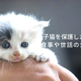 どうしたらいいの!?産まれたての猫を保護した場合の対処方法