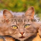 猫にブラッシングは必要なの?ブラッシング方法とおすすめブラシ