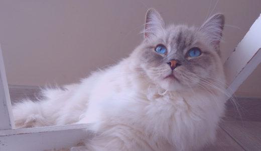 猫のお手入れの基本を紹介!おすすめの猫用のケア用品と注意点も