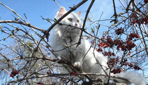 猫にキャットタワーは必要?キャットタワーの選び方とおすすめ商品を紹介