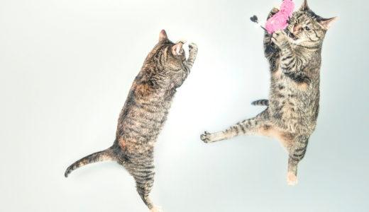 猫におもちゃは必要?猫が喜ぶおもちゃをベテラン愛猫家が選定